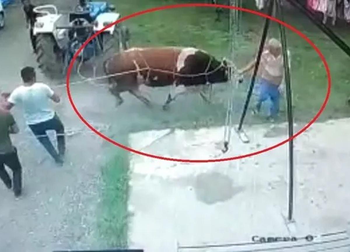 Komşusunun yardımına gitti! Kurbanlık boğa yaşlı adamı öldürdü...