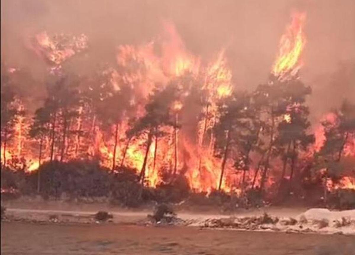 Son dakika: Yangın felaketi sürüyor! Muğla'nın Bodrum ilçesinde yangın çıktı!