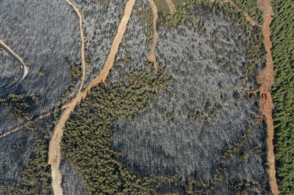 Otellerin yanındaki 80 hektar orman kül oldu