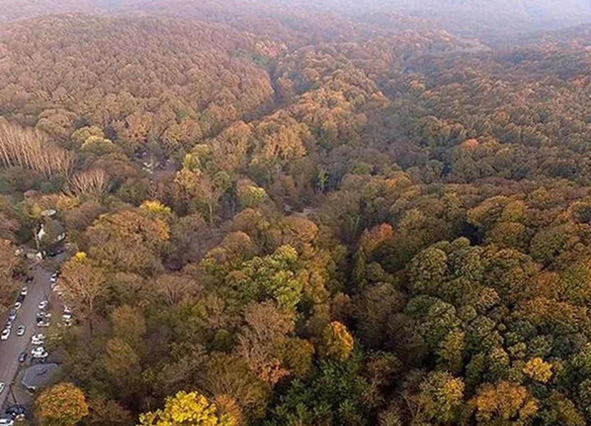 İki ilde ormanlara girişler yasaklandı