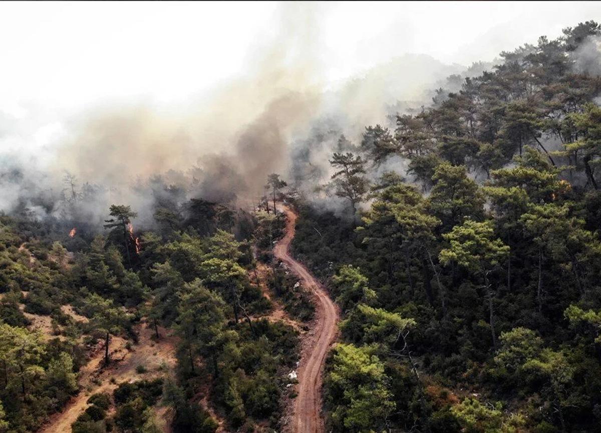 Herkesin merak ettiği soru: Orman yangınları sigorta kapsamında mı?