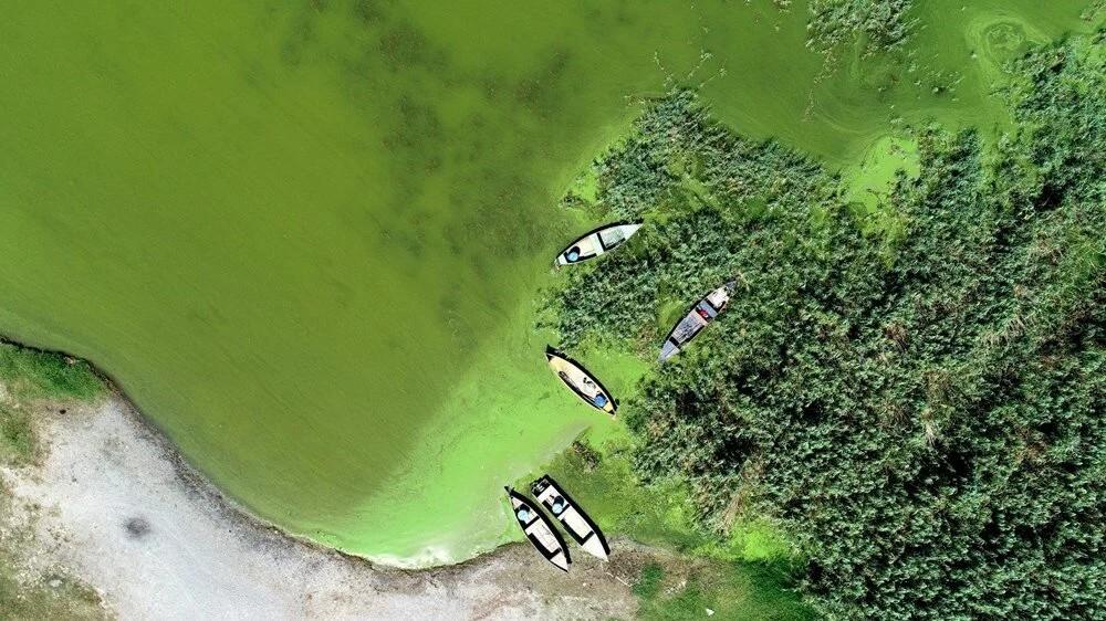Uluabat Gölü, yeşile büründü