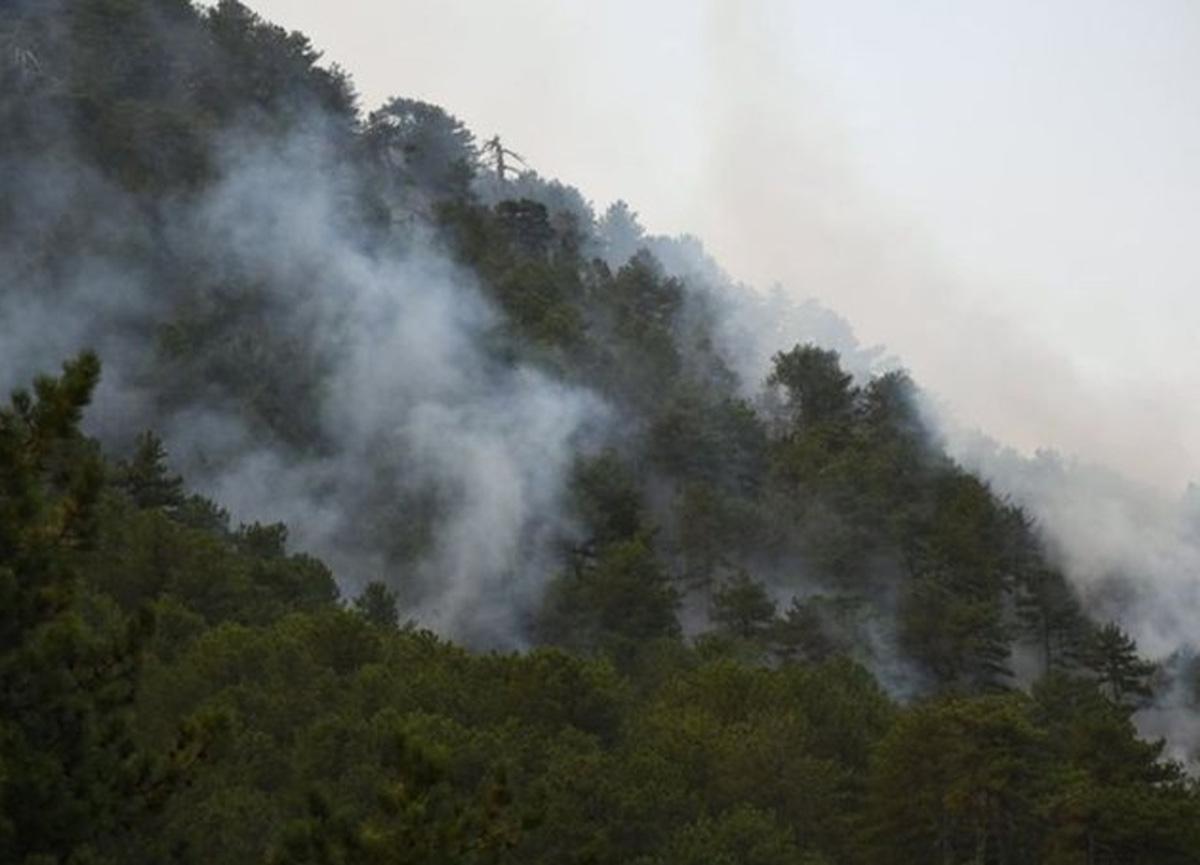 Orman yangınlarıyla ilgili son durum! İletişim Başkanlığı açıkladı