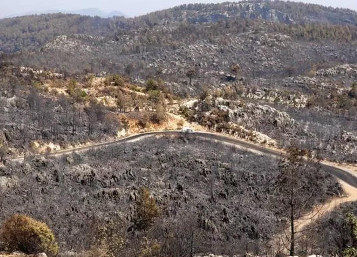 Antalya, Bodrum ve Marmaris'teki orman yangınları söndürüldü