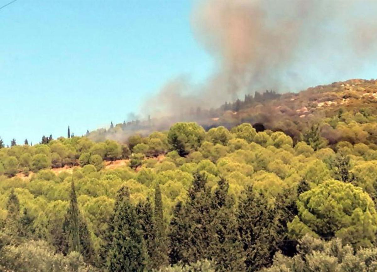 İzmir Aliağa'da ormanlık alanda yangın çıktı!