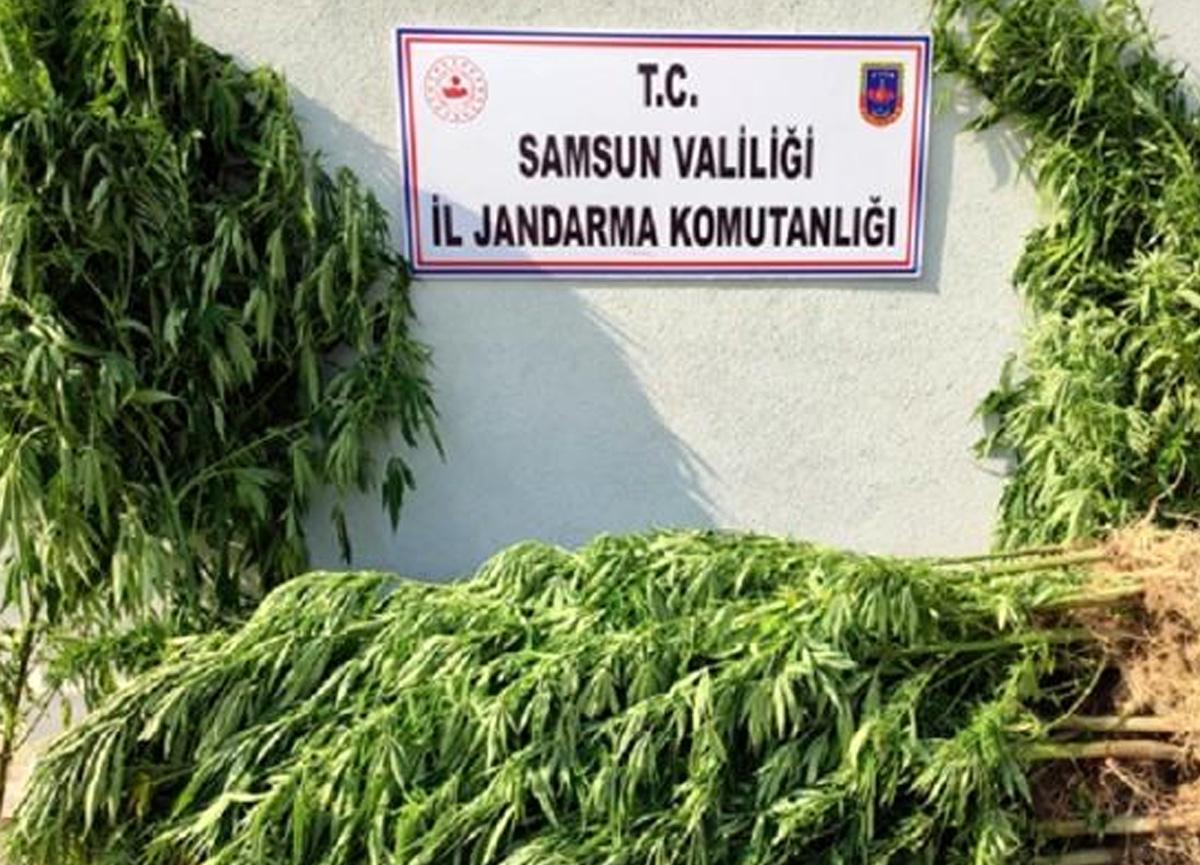Samsun'da büyük uyuşturucu operasyonları: 15 gözaltı