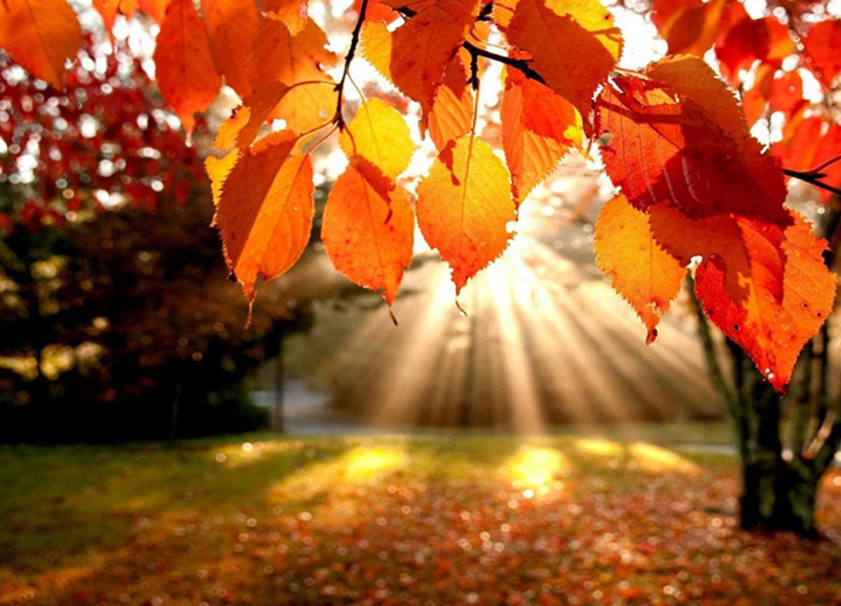 Sonbahar ekinoksu nedir? Gece-gündüz eşitliği ne zaman yaşanıyor?