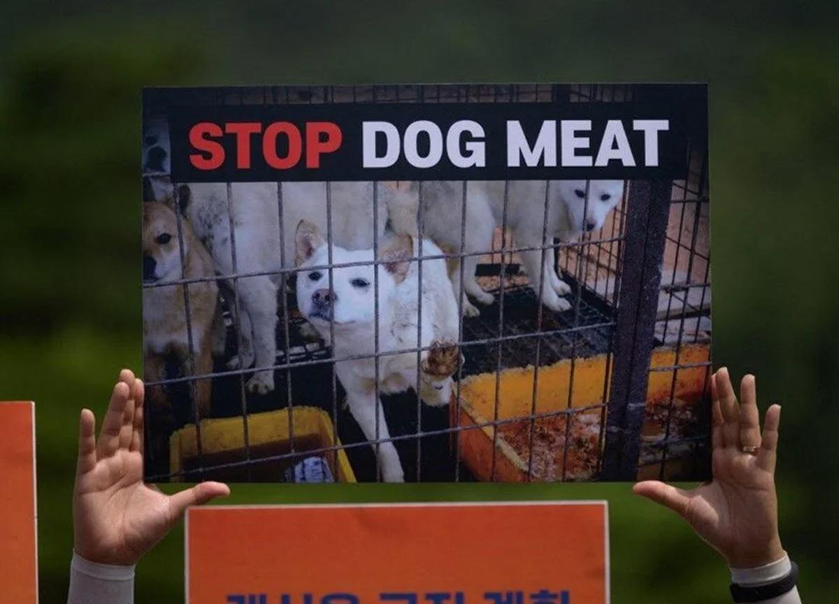 Güney Kore, köpek eti yemeyi yasaklamayı planlıyor