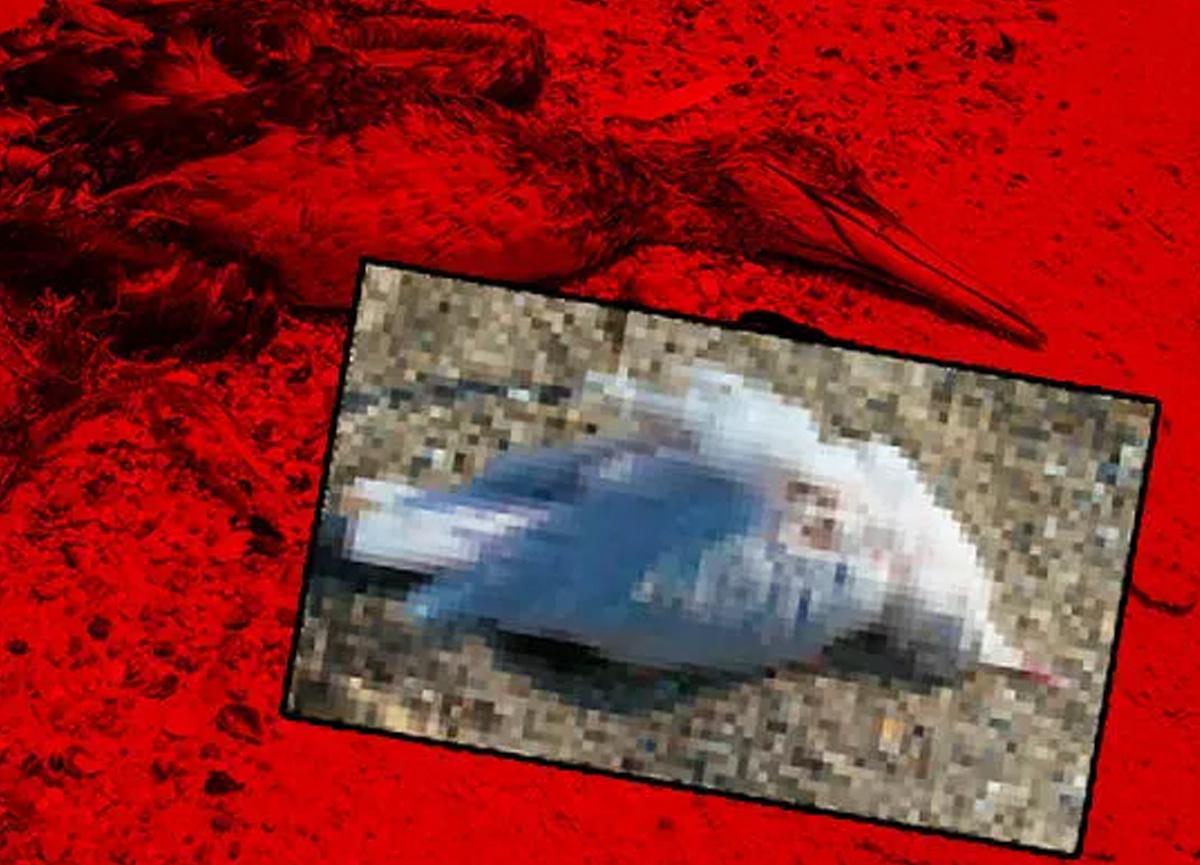 Kırım'da binlerce kuş ölü bulundu! Yeni bir salgın mı?