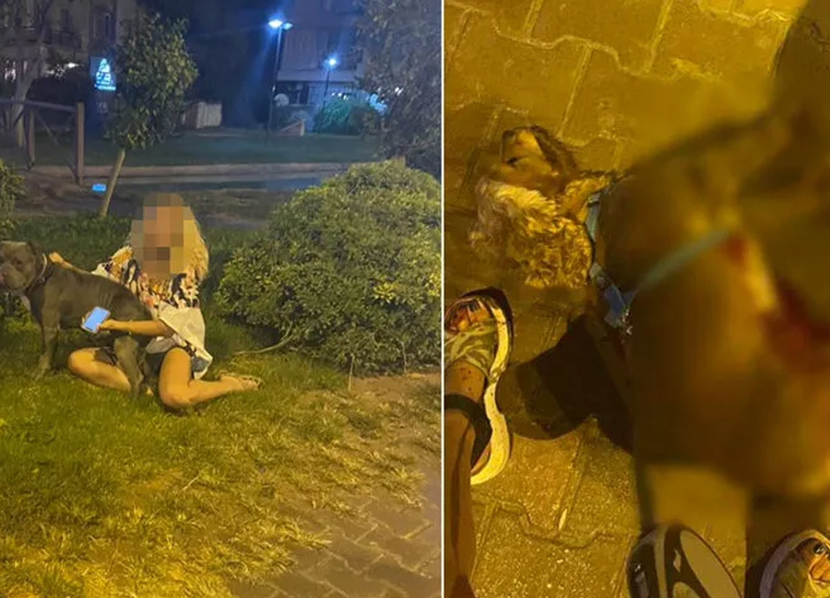 Antalya'da pitbull dehşeti! Sosyal medyayı ayağa kaldırdı