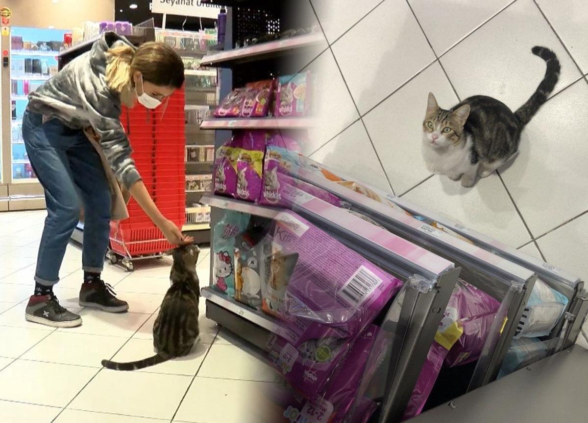 Kadıköy'de bir kedi, girdiği markette kendine zorla mama aldırdı