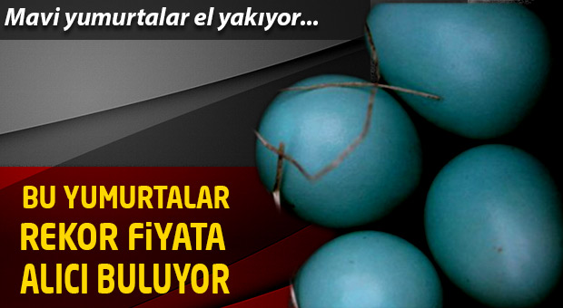 Bu yumurtaların tanesi 10 lira