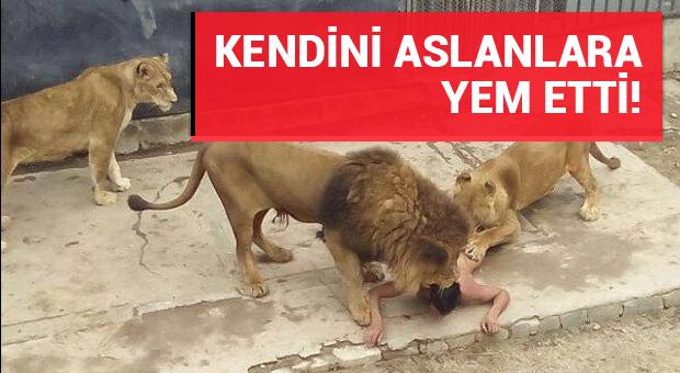 Şilili bir genç kendini aslanlara yem etti